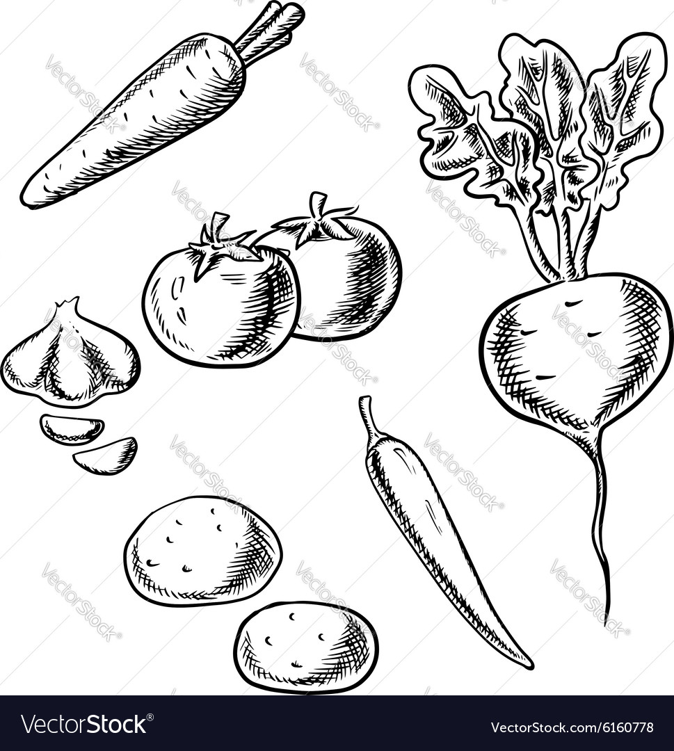 Carrot tomato beet potato pepper and garlic vector image
