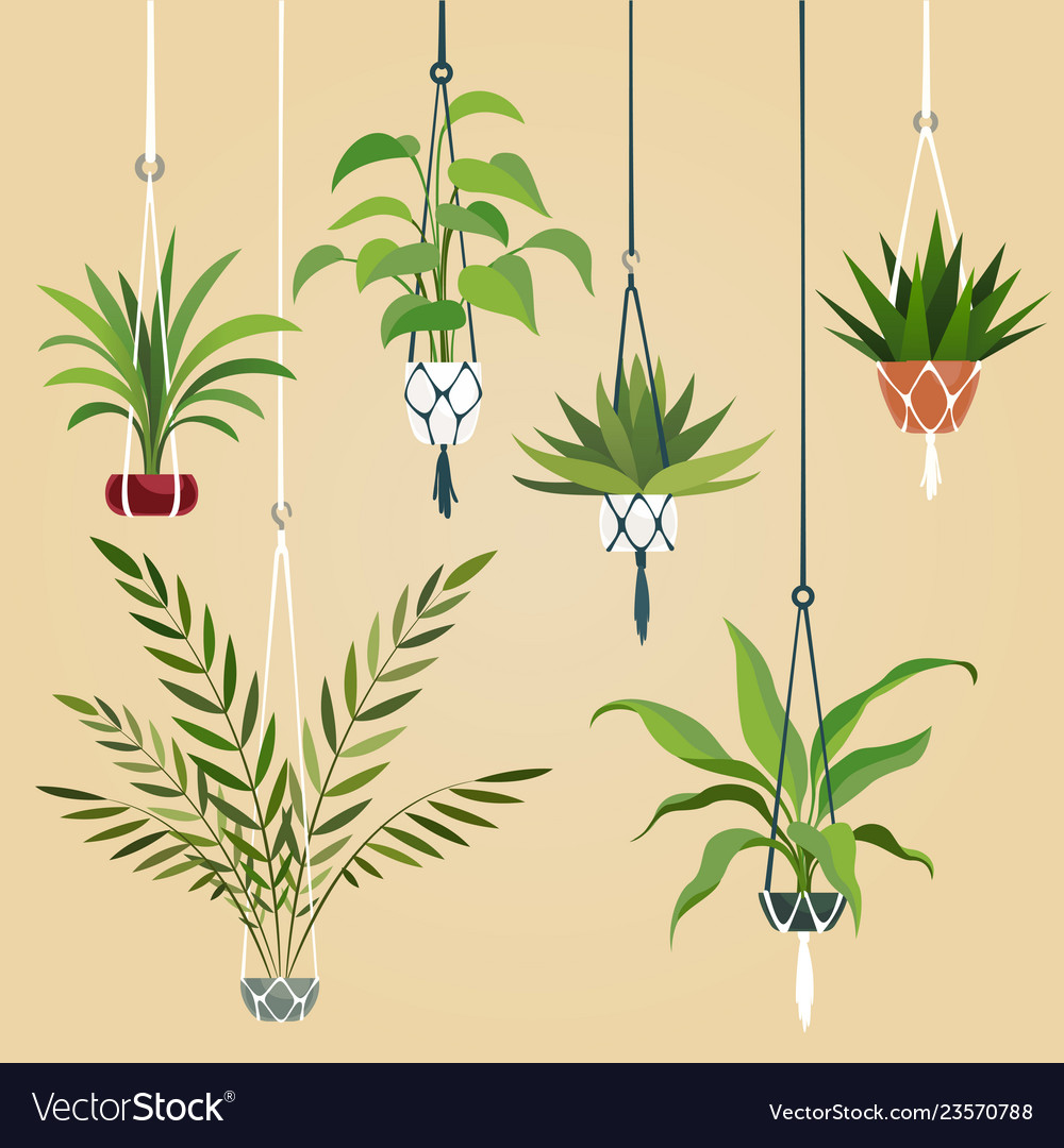 Hanging house plant indoor plants with macrame
