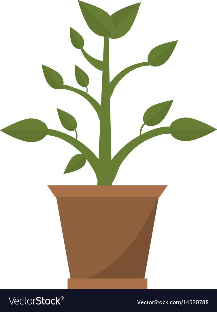 Pot plant garden image