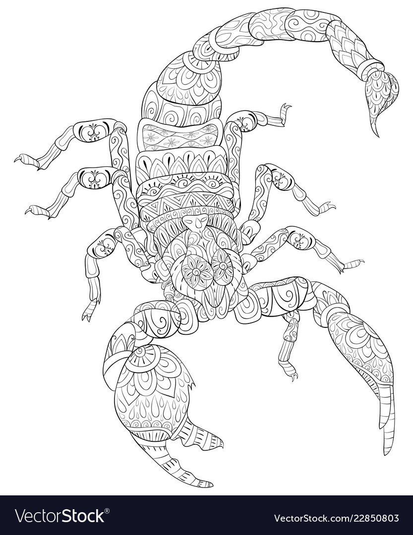 adult coloring bookpage a scorpion image vector image vectorstock