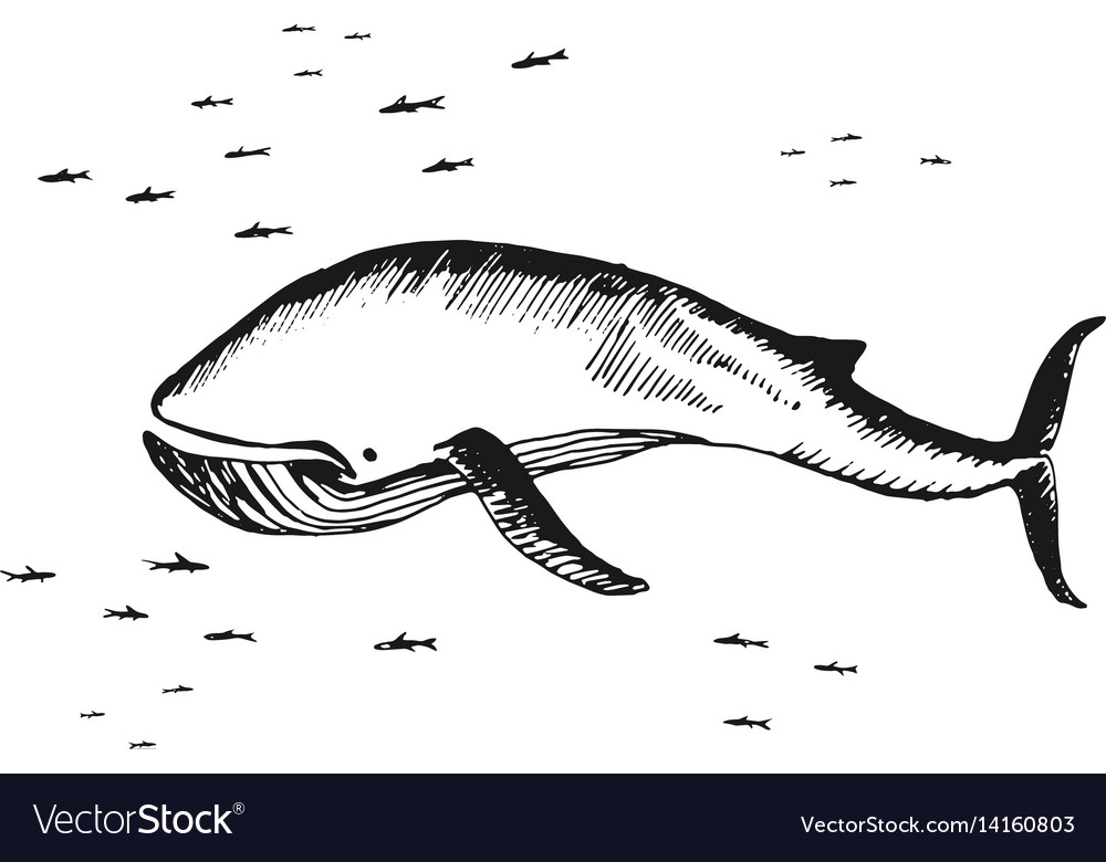 Marine whale surrounded by small fish