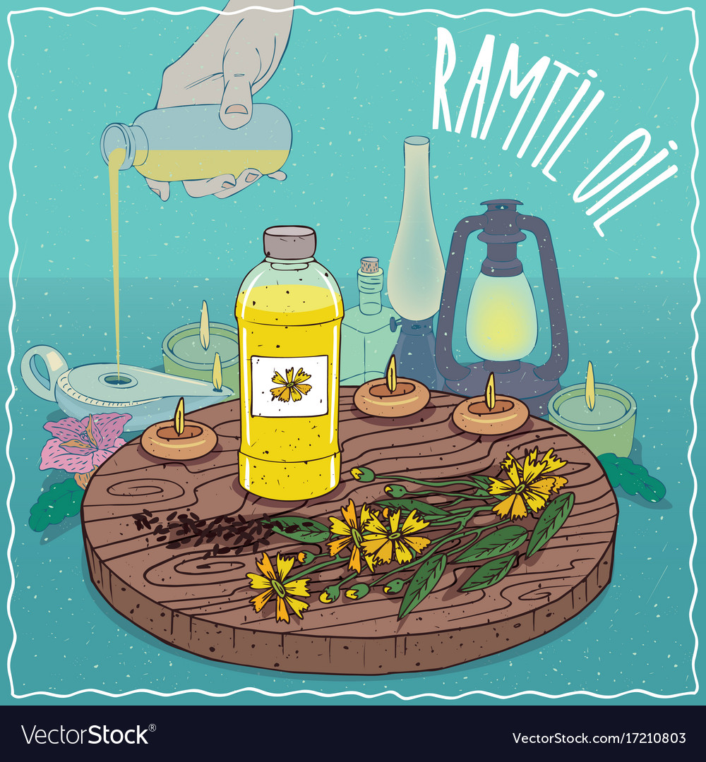 Ramtil Oil Used As Fuel For Oil Lamp Royalty Free Vector