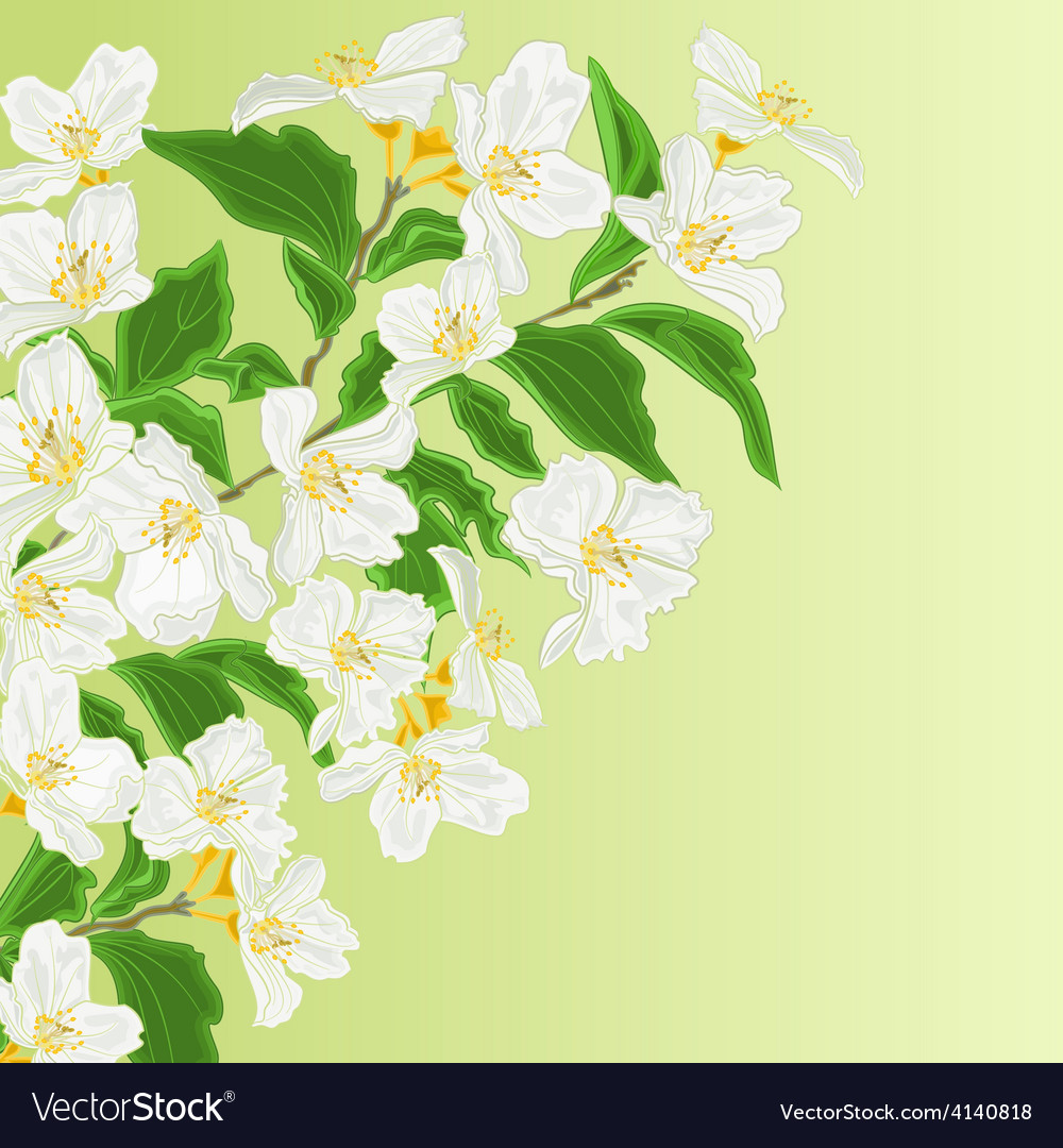 Jasmine flower branch spring background royalty free vector jasmine flower branch spring background vector image izmirmasajfo