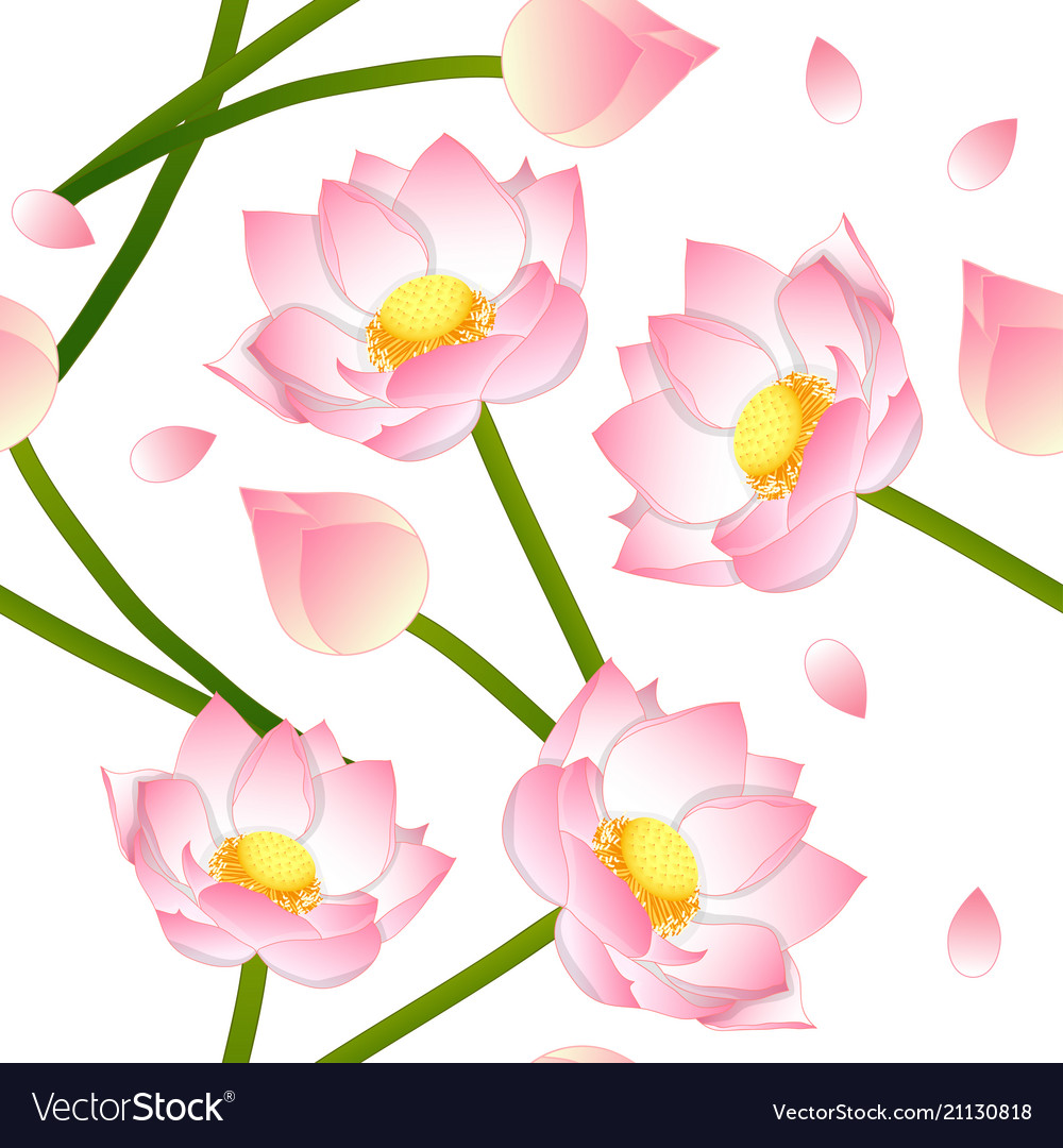 Pink Indian Lotus On White Background Royalty Free Vector
