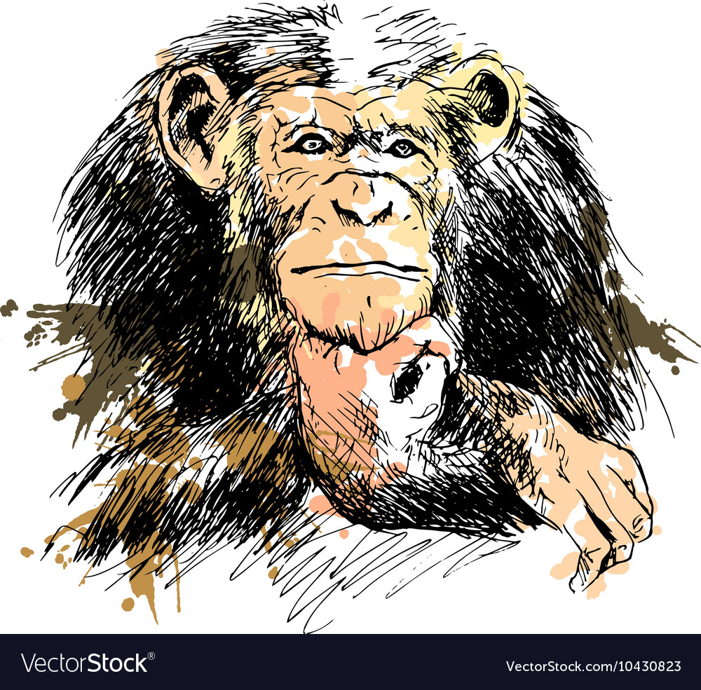 colored hand drawing chimpanzee royalty free vector image