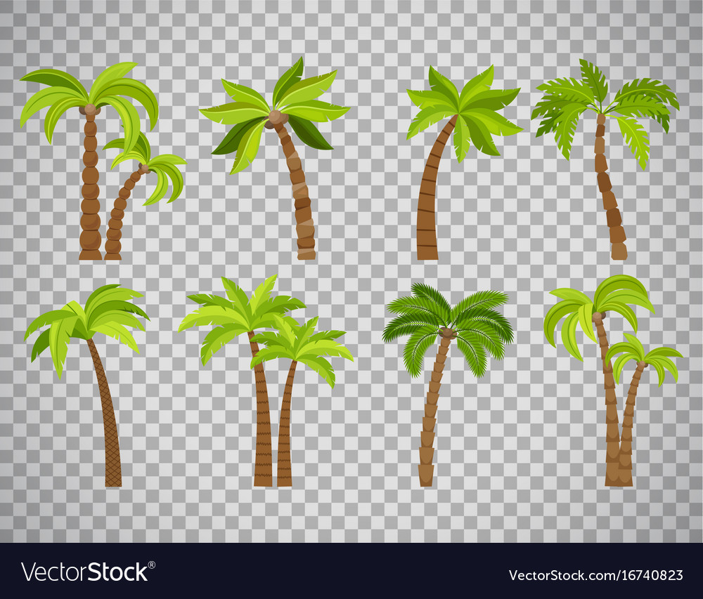 Palm trees set on transparent background vector image