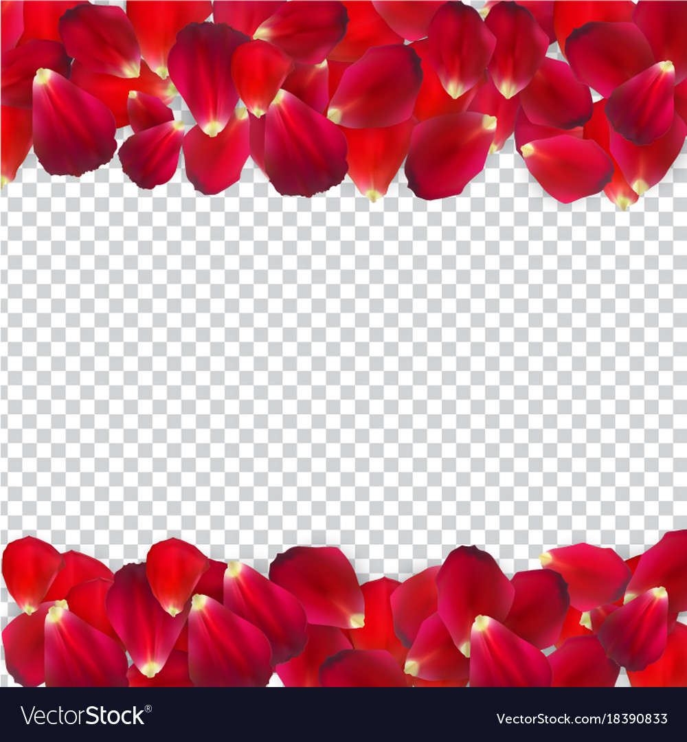 Naturalistic rose petals on transparent background