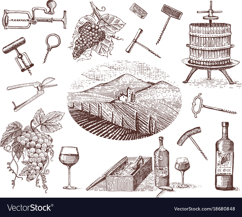 Wine harvest products press grapes vineyards vector image
