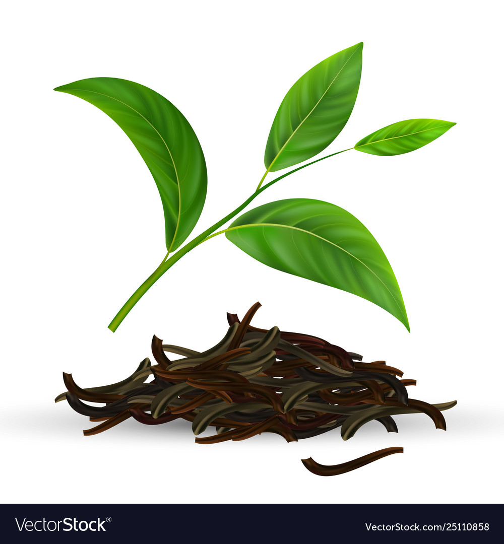 Fresh And Dry Green Tea Leaves Royalty Free Vector Image
