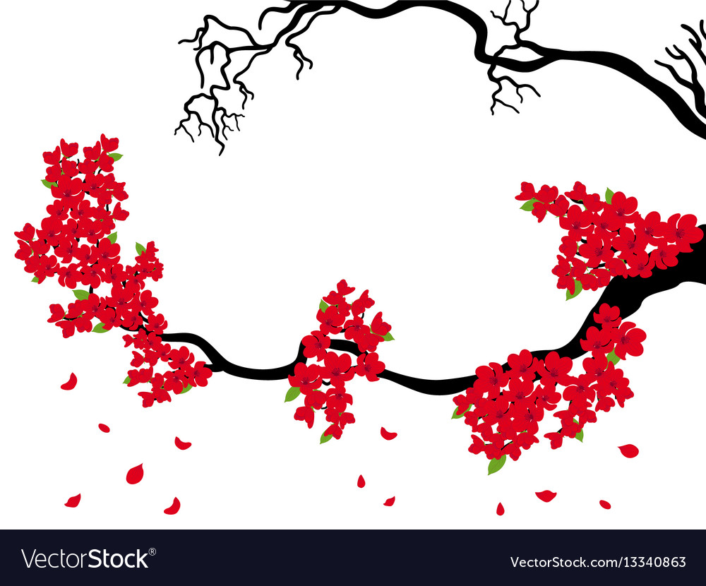 Blooming and dried sakura branches vector image
