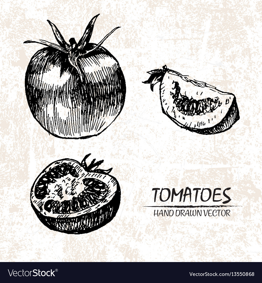 Digital detailed tomatoes hand drawn
