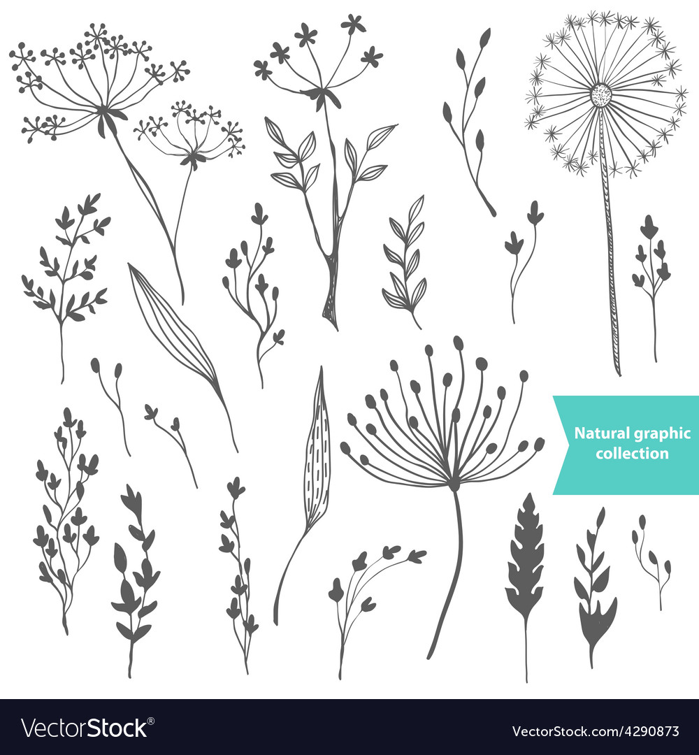 Beautiful color grass silhouette collection