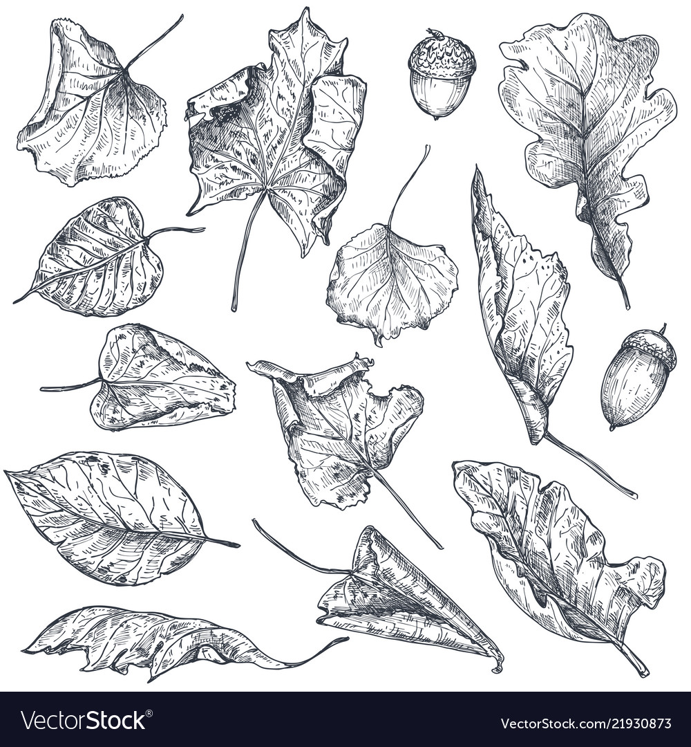 Collection hand drawn dry autumn leaves