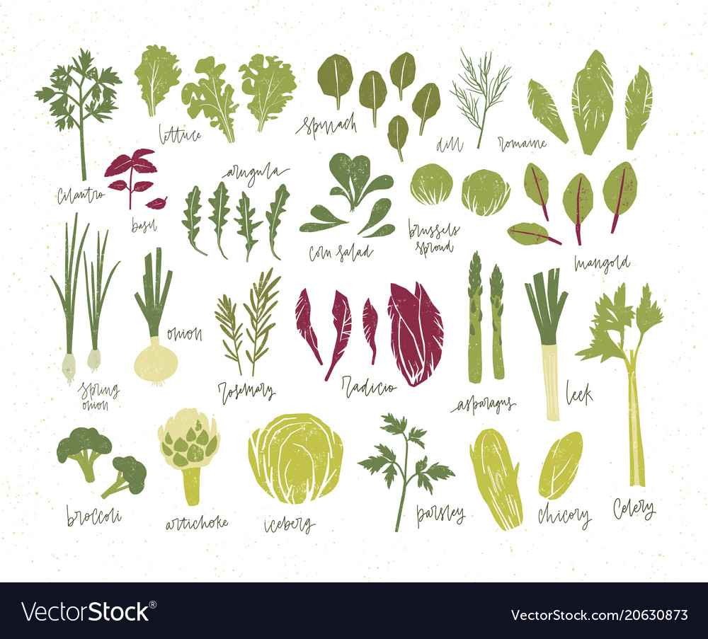 Collection of green plants bundle of tasty