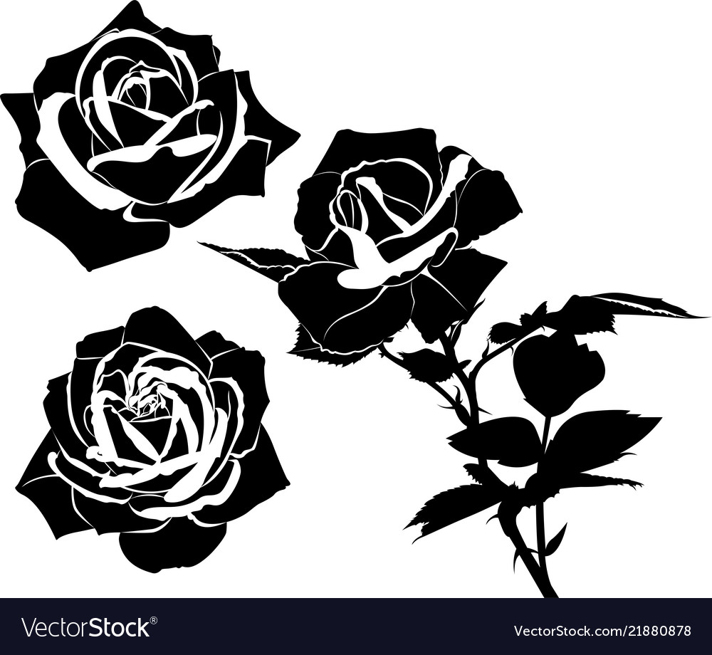Set flowers roses isolated on white background vector