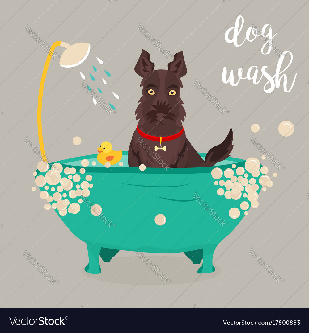room library in ideas design wash home with laundry luxury dog shower