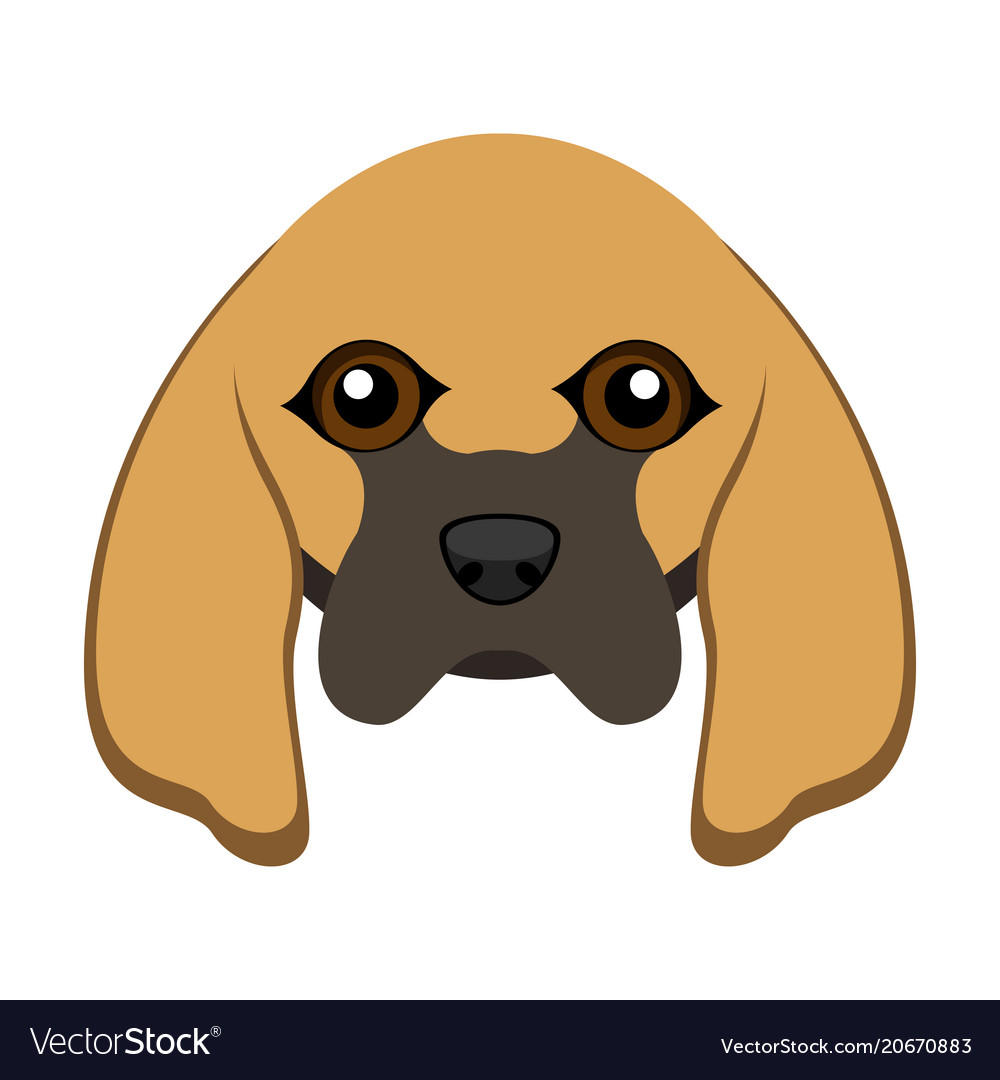 Cute bloodhound dog avatar vector image