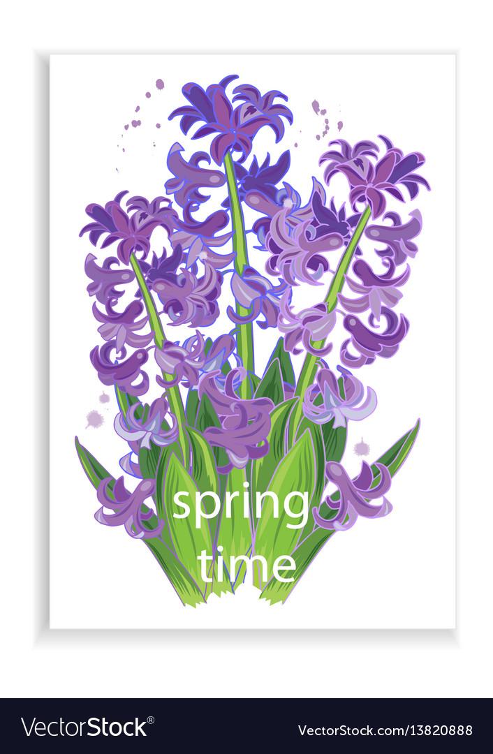 Spring flowers purple hyacinths