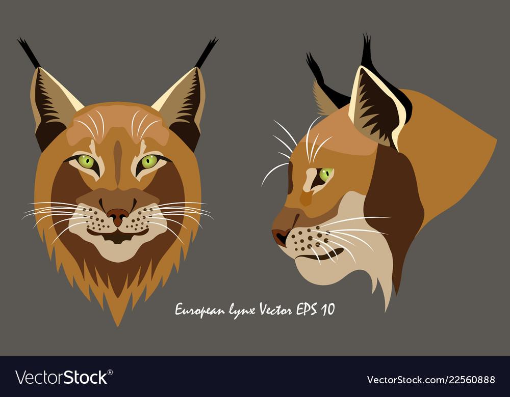 Two portraits of lynx