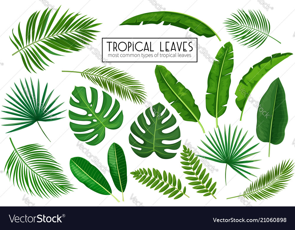 Set Tropical Leaves Royalty Free Vector Image Vectorstock A wide variety of artificial tropical leaves options are available to you, such as material, occasion, and plant type. vectorstock