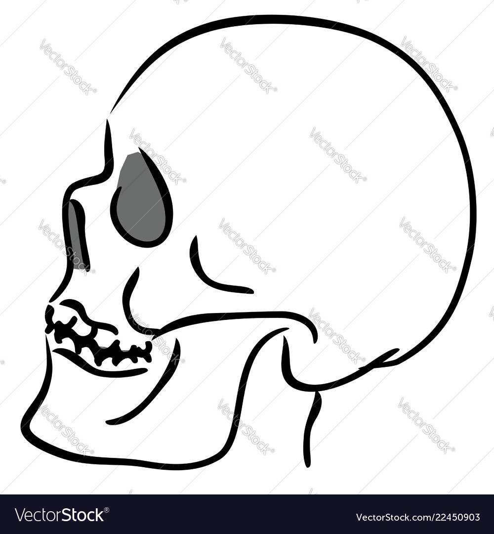 Linear sketch of the skull in profile
