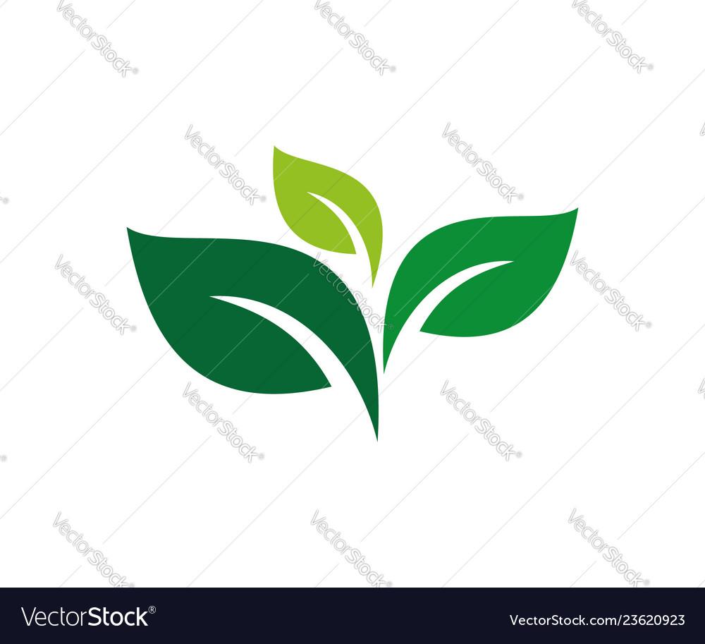 Green leaves star flower logo designlogo leaf