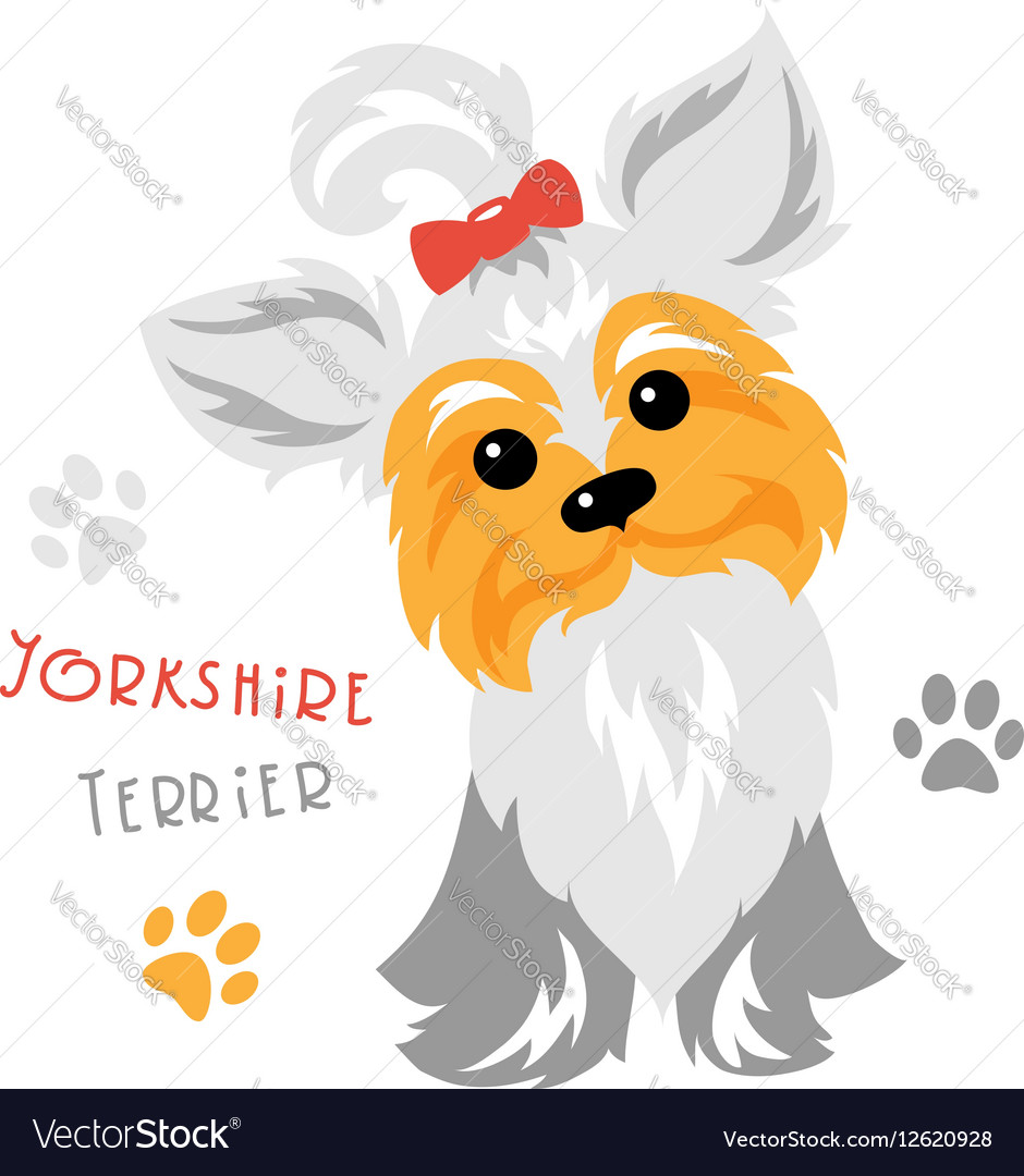 Funny Yorkshire terrier dog sitting