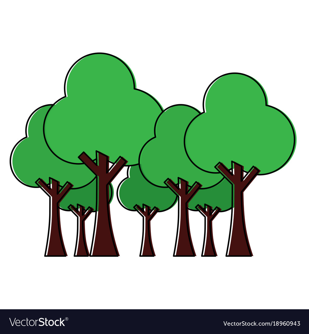 Trees forest park natural botanical ecology
