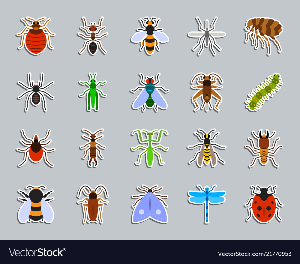 Danger insect patch sticker icons set
