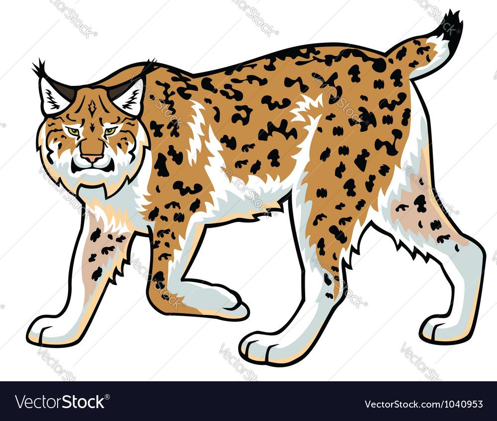 Lynx on white