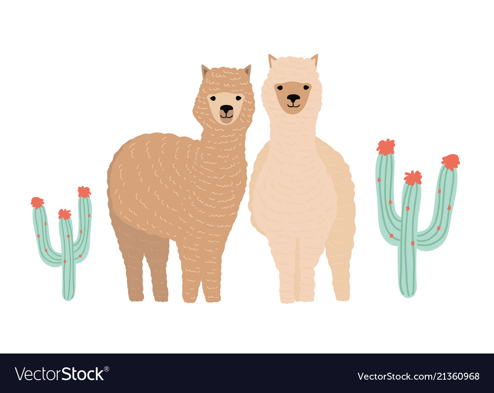 Pair of cute llamas isolated on white background