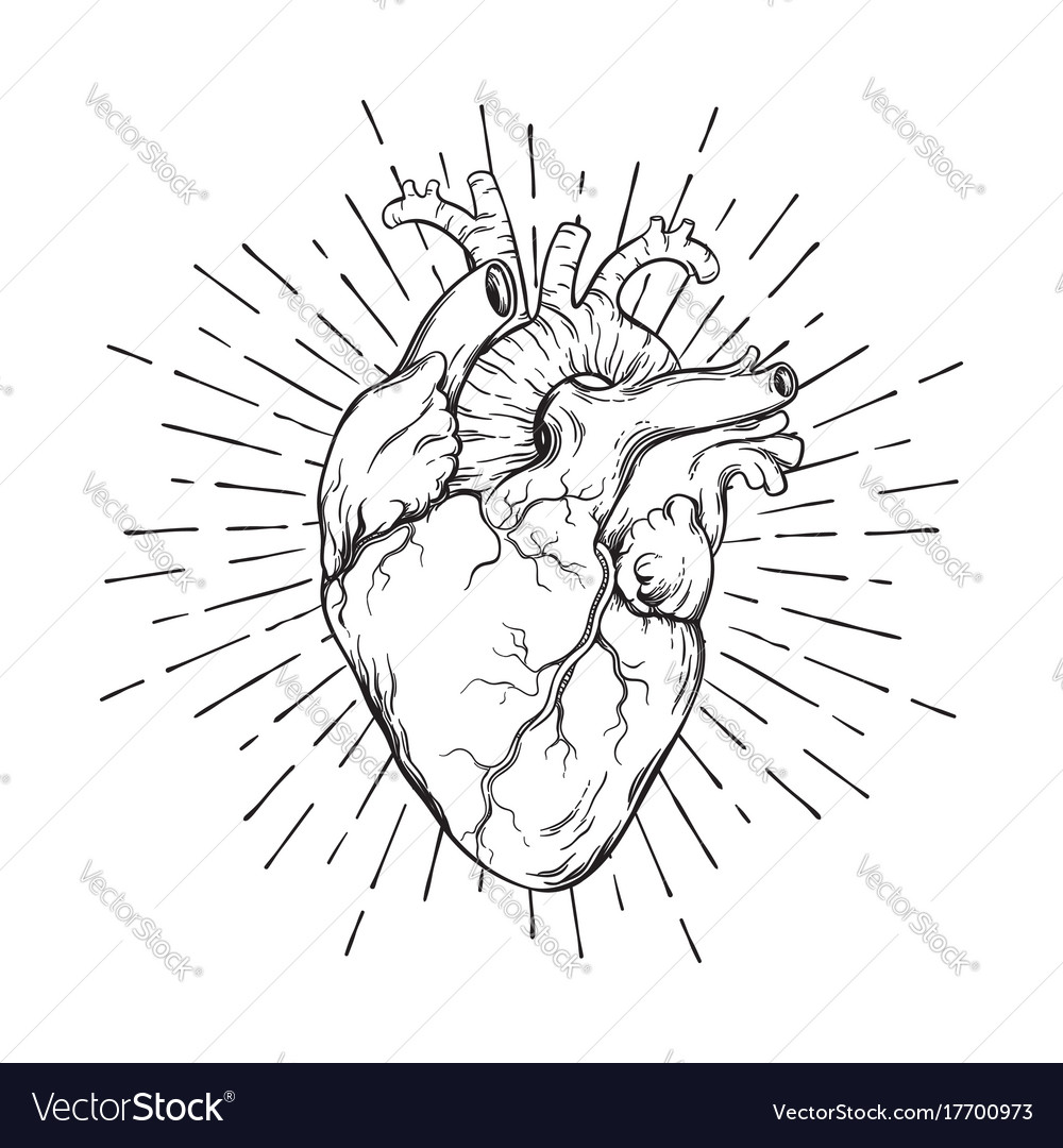 Hand Drawn Human Heart With Sunburst Royalty Free Vector