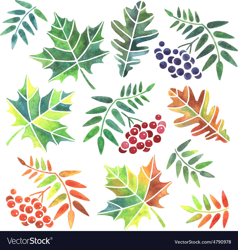 watercolor leaves royalty free vector image vectorstock