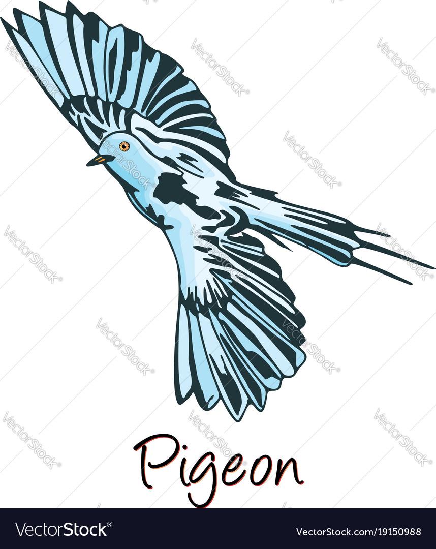 Pigeon color