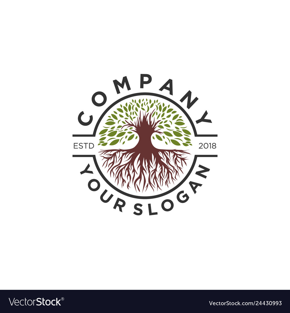 Olive tree logo designs root logo