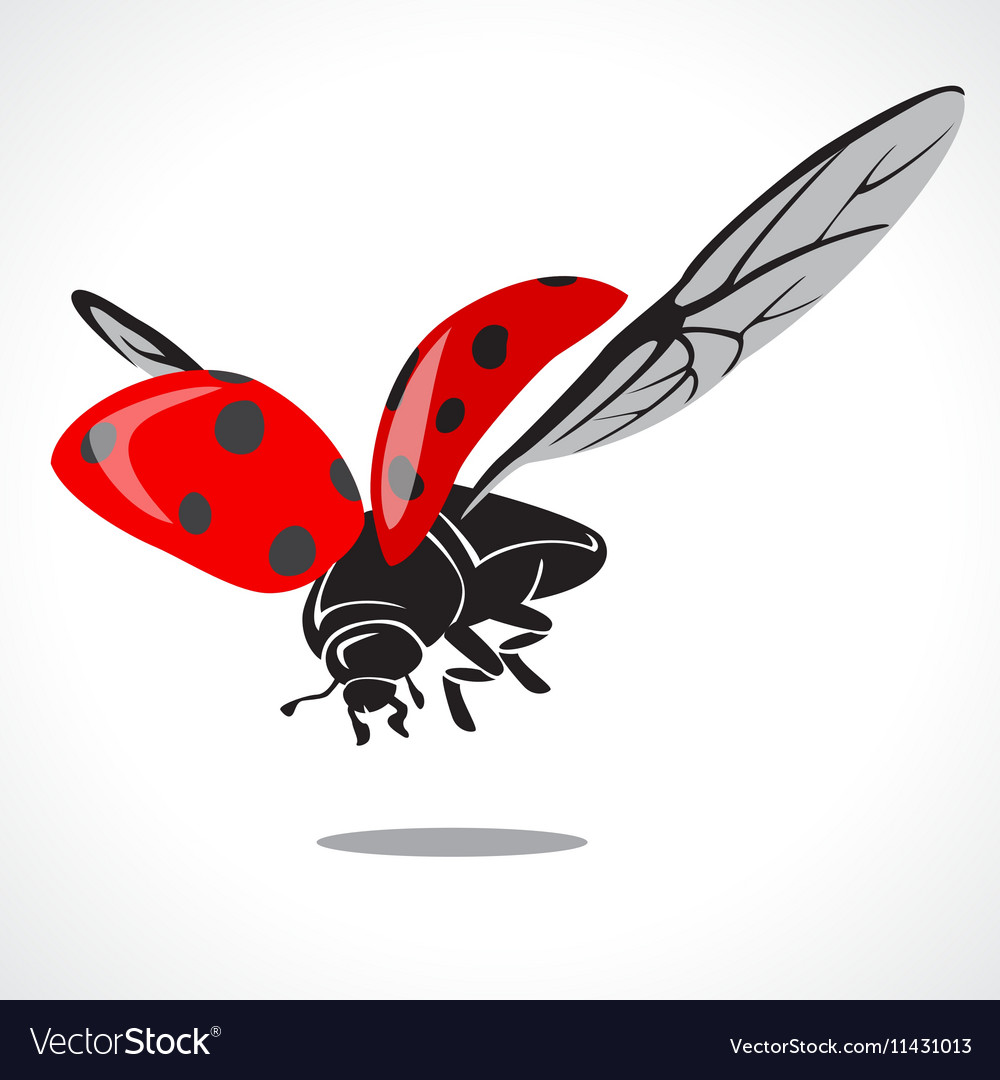 Lady bug graphic a