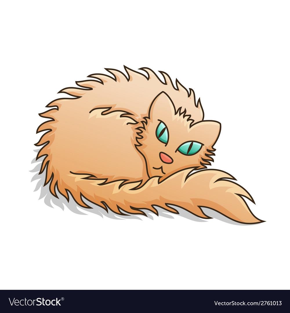 Red Fluffy Cat