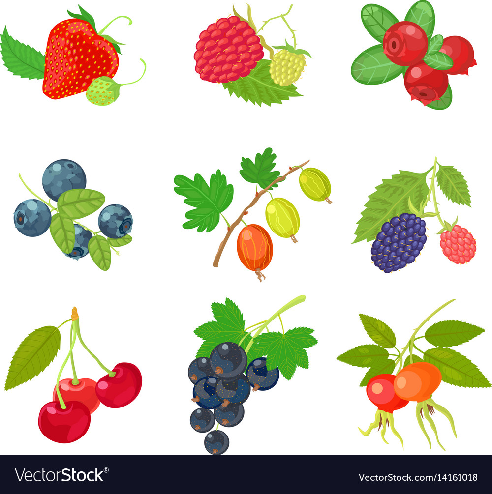 Berries isolated set icon on white background