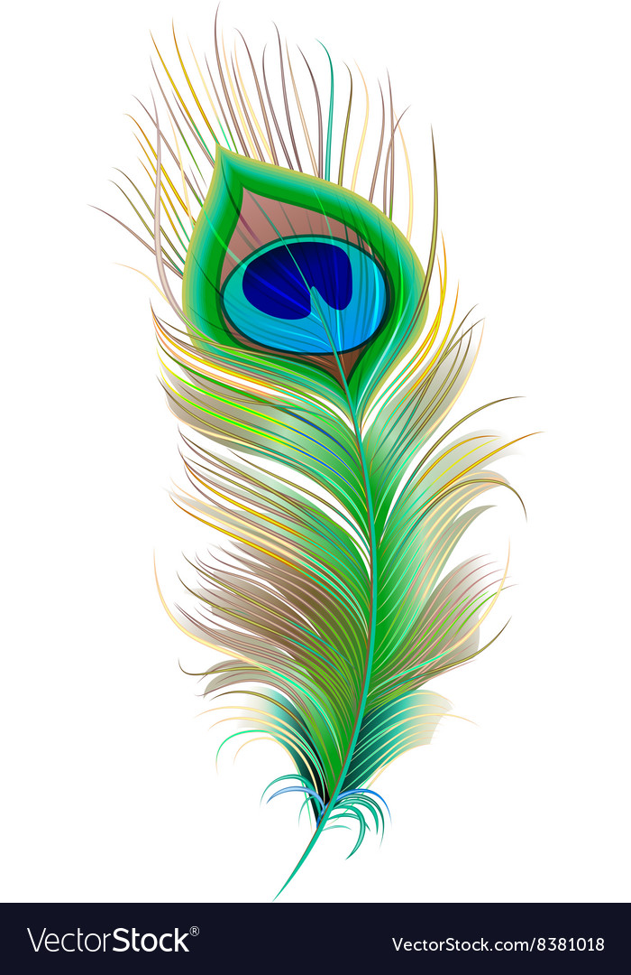 Peacock feather beautiful bird feather royalty free vector - Beautiful peacock feather ...