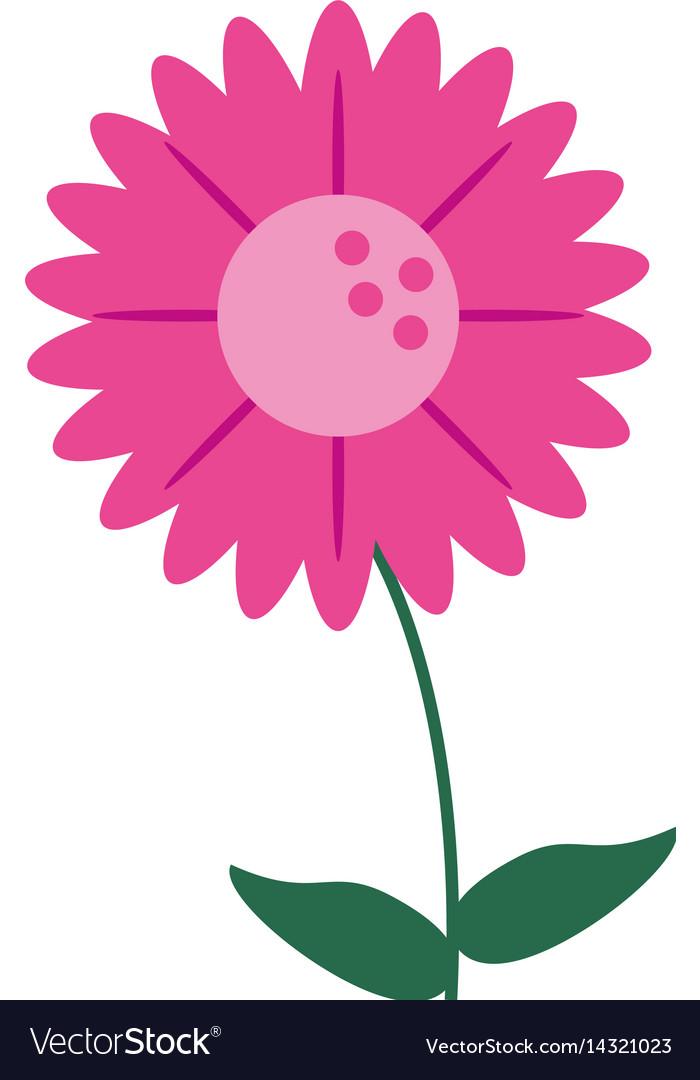 Gerbera flower natural image vector image
