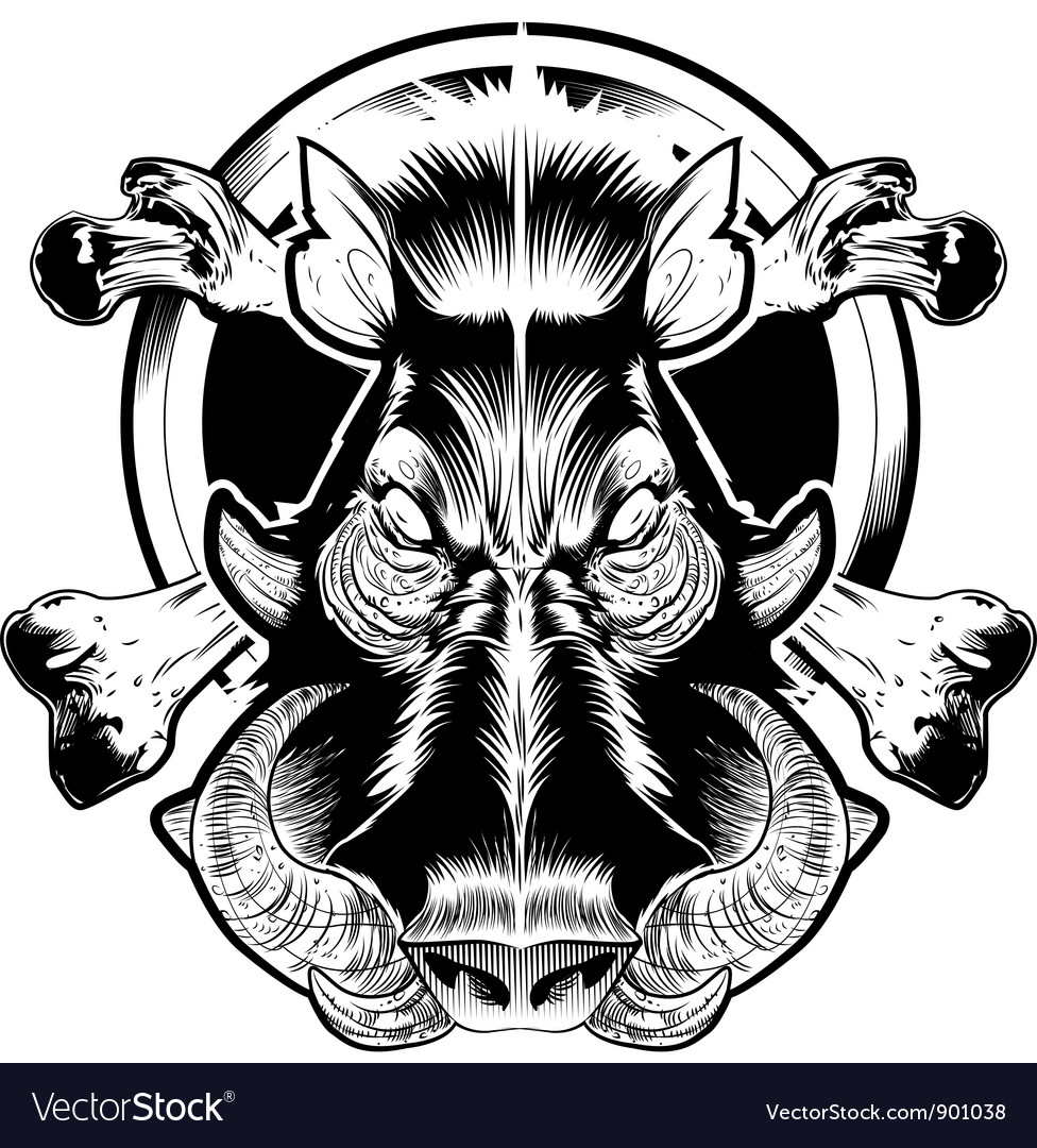 Wild bore face vector