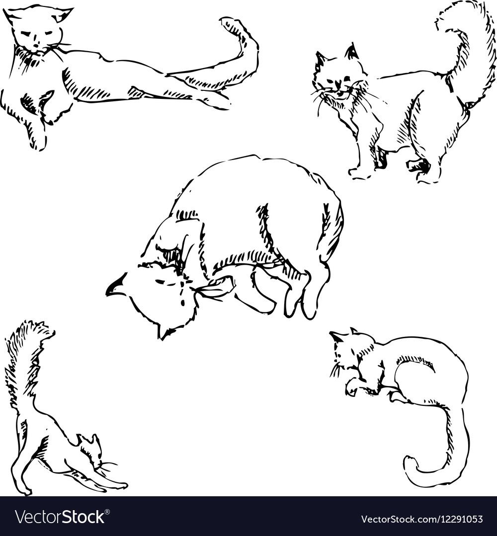 Cats a sketch by hand pencil drawing