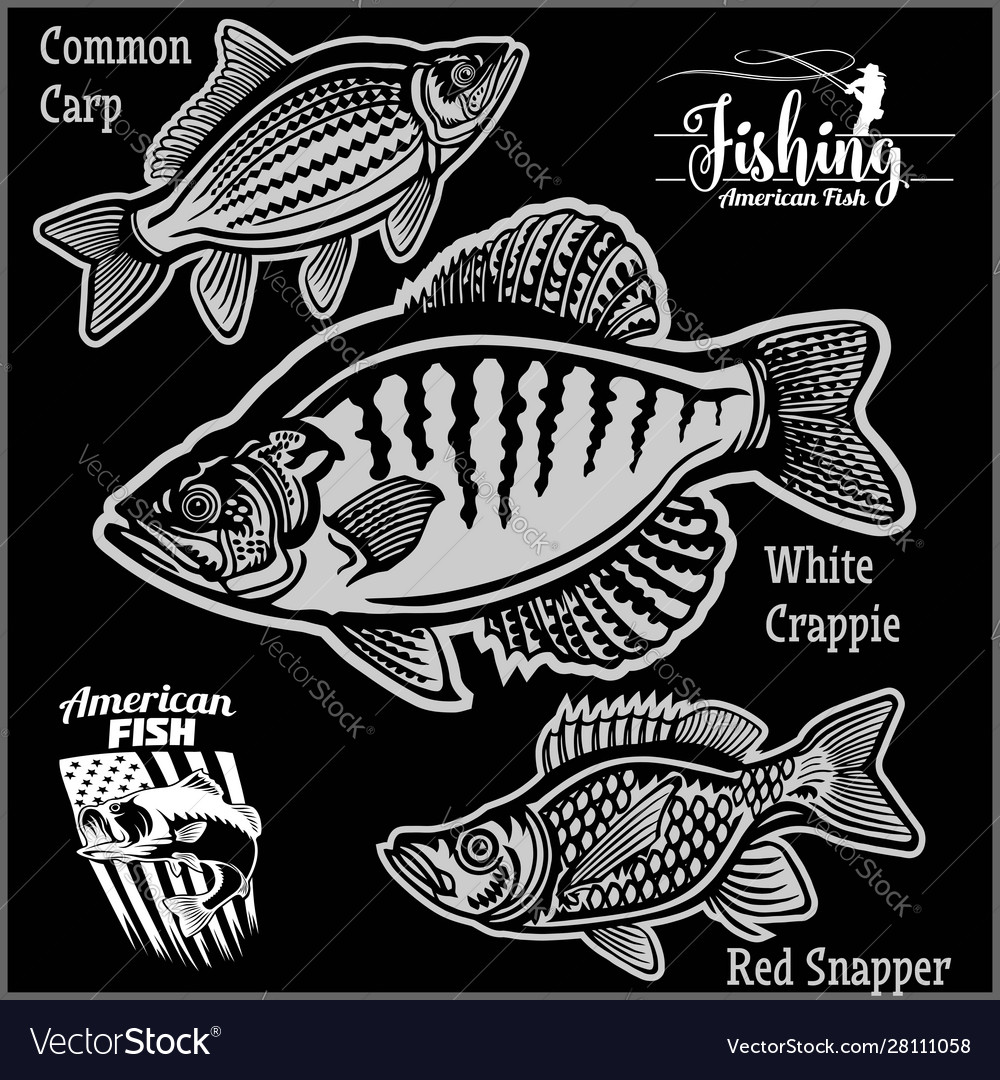 White crappie common carp and red snapper