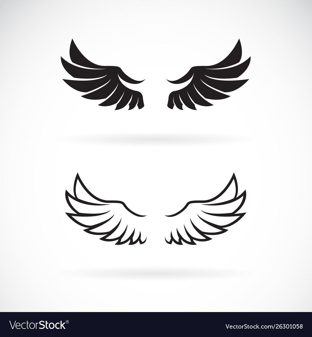 Wing design on white background wing icon or logo
