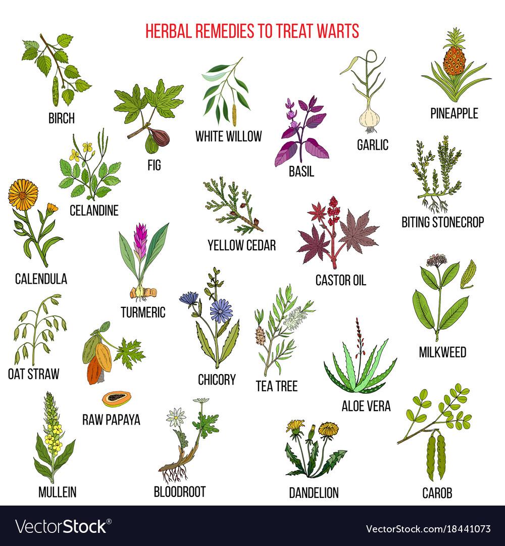 warts herbal cure cum să elimini asta de viermi