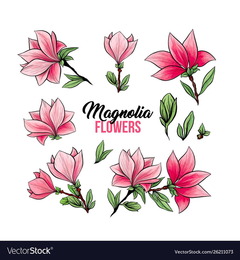 Magnolia flowers hand drawn set
