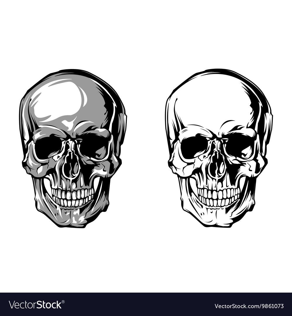 Skull Anatomy Front Royalty Free Vector Image Vectorstock