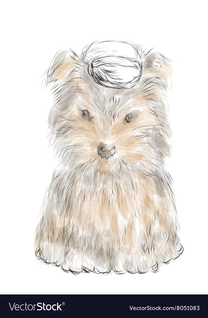Male Teacup Yorkie Royalty Free Vector Image Vectorstock