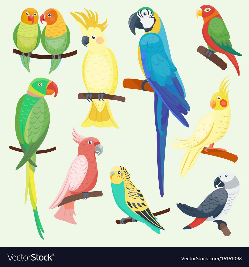 Cartoon exotic parrots set
