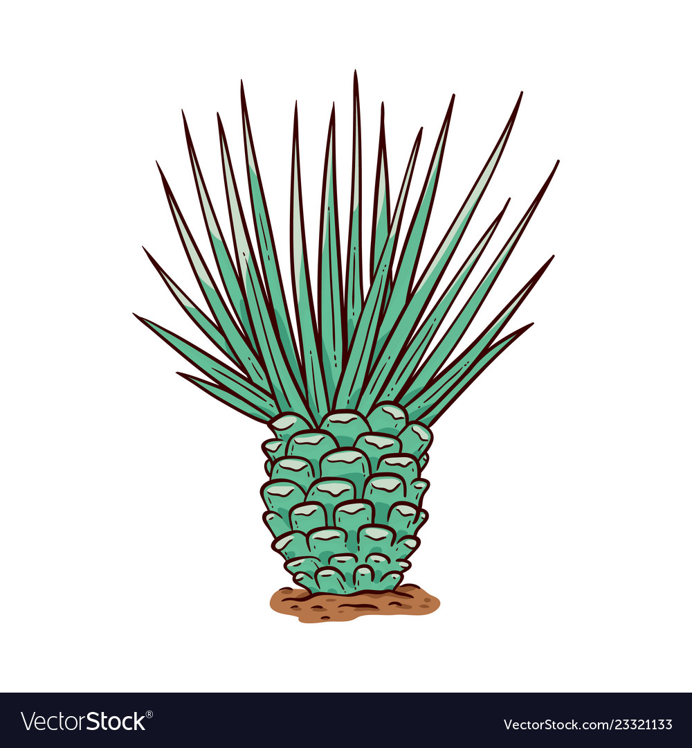 Sketch cactus with needles hand drawn icon